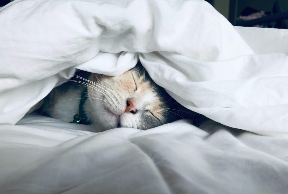 cat-sleeping-in-blanket