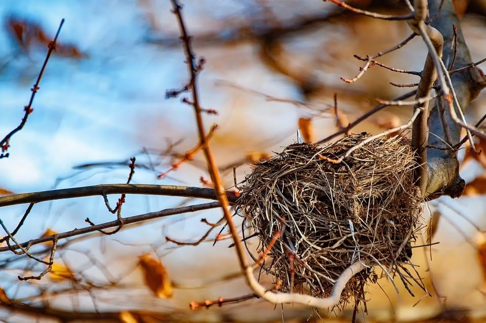 empty-birds-nest-in-tree