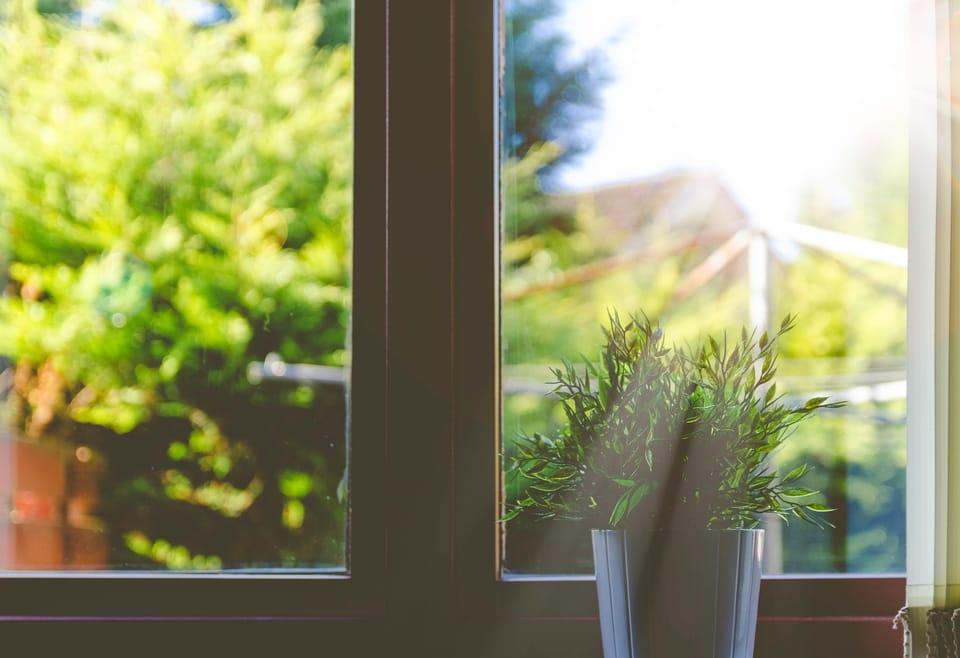 sunlight-through-window-with-plant