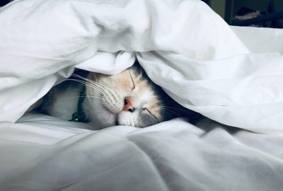 cat-sleeping-in-blanket